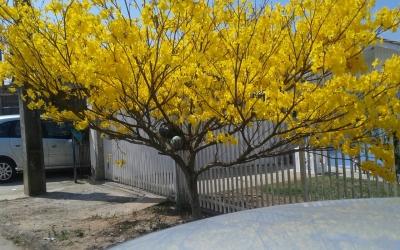 Árvore desperta atenção de morador ...