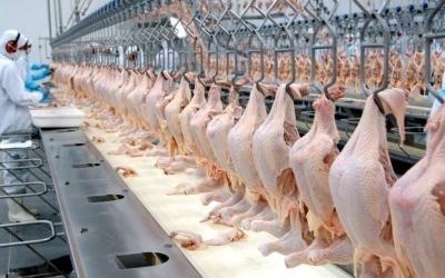 Paraná lidera produção de proteína ...