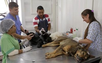 Animais resgatados recebem cuidados...